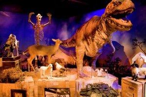 متحف ريبلي صدق أو لا تصدق في أمريكا