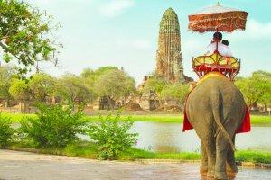 الفيلة وسيلة التنقل الشهيرة في تايلاند
