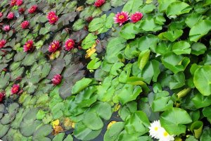 البحيرات الخضراء في حديقة زغرب النباتية