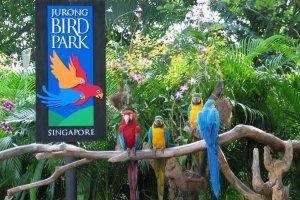 حديقة جورونغ للطيور