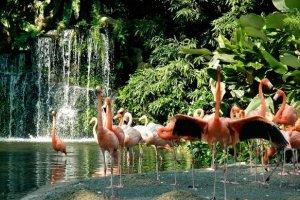 متنزه يورونغ للطيور في سنغافورة