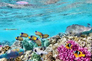 الحاجز المرجاني العظيم في سيدني - أستراليا