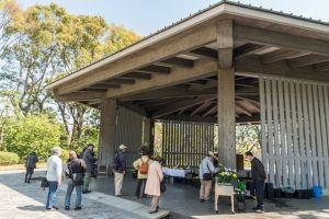 مقبرة تشيدوريجافوتشي في طوكيو - اليابان