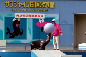 صن شاين اكواريوم الدولي في طوكيو - اليابان