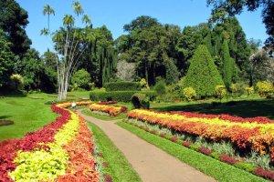 حديقة بيرادينيا النباتية في مدينة كاندي - سريلانكا