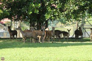 حديقة الغزلان