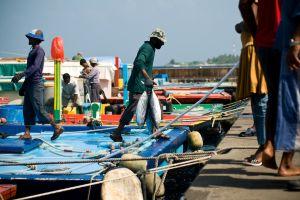 سوق السمك في ماليه - جزر المالديف