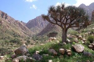 محمية جبل علبة