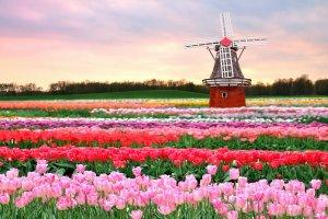 حديقة كوكينهوف في هولندا