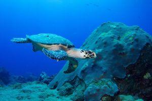 جزيرة السلاحف