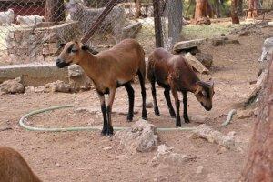 حديقة حيوانات أنطاليا