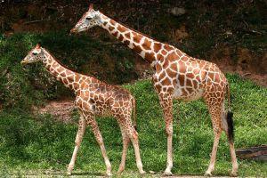 حديقة حيوانات دبلن في أيرلاندا