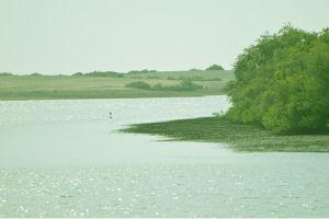 محمية الزوراء الطبيعية في عجمان
