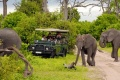 التجول وسط الحيوانات برحلات سفاري افريقيا
