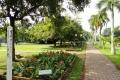 النباتات في حديقة فيهاراماهاديفي
