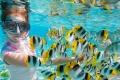 الحياة البحرية في جزيرة سيبو