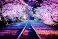 الربيع في اليابان