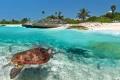 السلاحف البحرية في شاطئ بلايا دي أكومال المكسيك