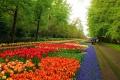 النباتات الملونة في حديقة أوتي النباتية