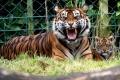 حديقة حيوانات دبلن