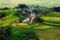 مزارع البن