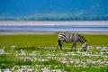 الحديقة الوطنية Djoudj